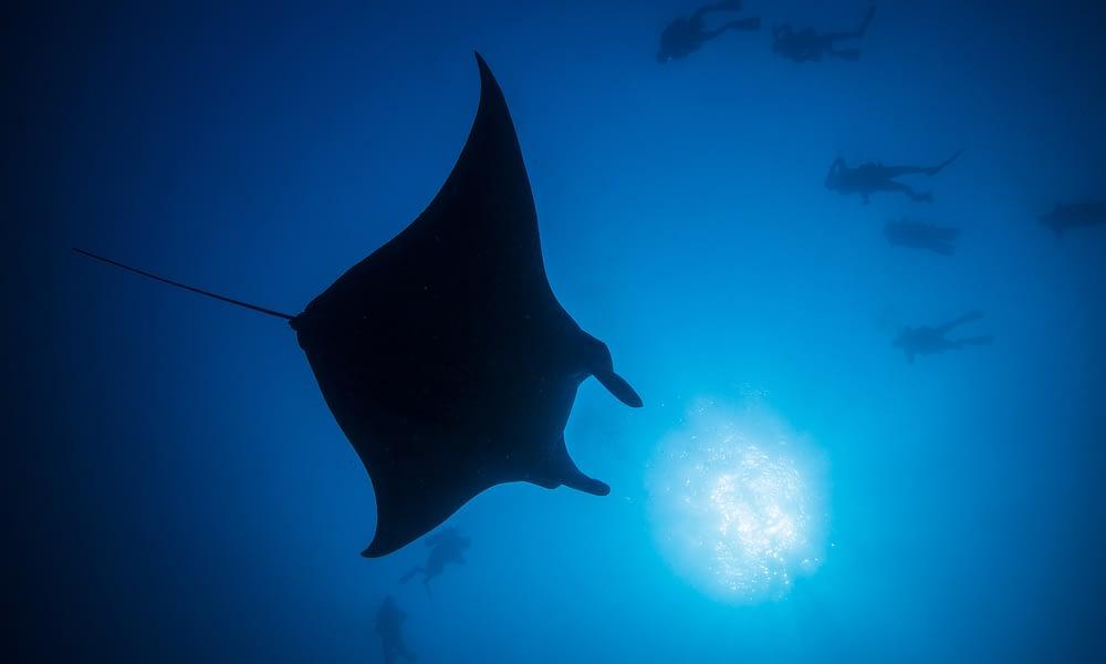 Maldives: Spend Christmas underwater…